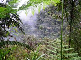 Parque Nacional Yanachaga – Chemillén