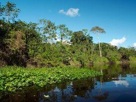 Reserva Nacional de Pacaya – Samiria