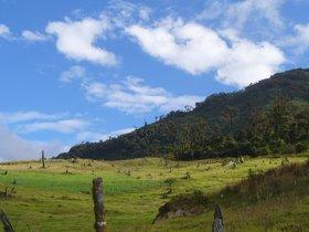 Bosque de Protección En Pagaibamba