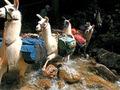 Llama Trek Olleros Chavín