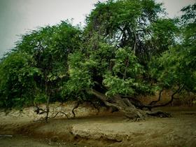 Bosque Seco Amotape