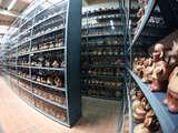 Foto de Tour Guiado por el Museo Larco