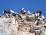 Foto de Tour por la Reserva Nacional de Paracas