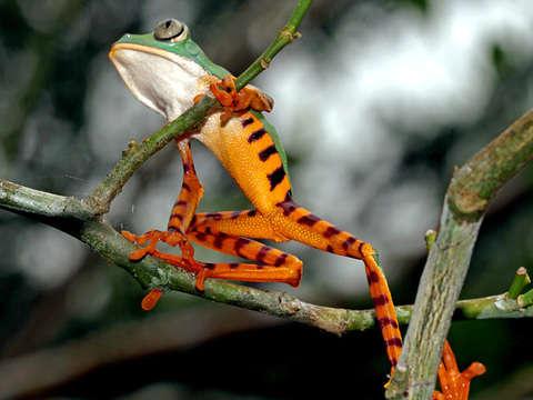3d/2n Albergue Natural en Iquitos
