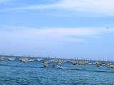 Foto de Full Day: Nado Con Tortugas en el Ñuro + Punta Veleros