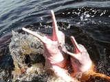 Foto de 3d/2n Reserva Nacional Pacaya Samiria - Dolphin Lodge
