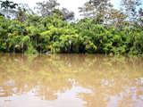 Foto de 4d/3n Iquitos + Programa Río Amazonas