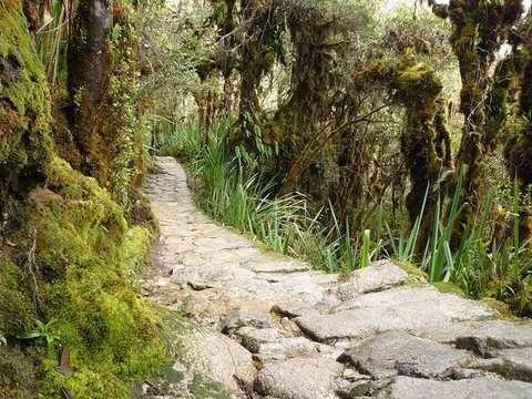 4d/3n Inka Jungle a Machu Picchu (Solo Peruanos)