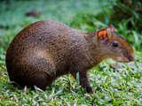 Foto de 4d/3n Tambopata Natural y Aventurero