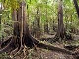 Foto de 3d/2n Fauna Silvestre en la Reserva Tamshiyacu Tahuayo