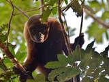 Foto de 4d/3n Fauna en Selva Virgen en la Reserva Tamshiyacu