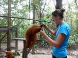 Monkeys in Pilpintuwasi.