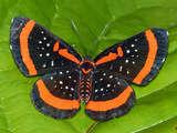 Butterflies in Pilpintuwasi.