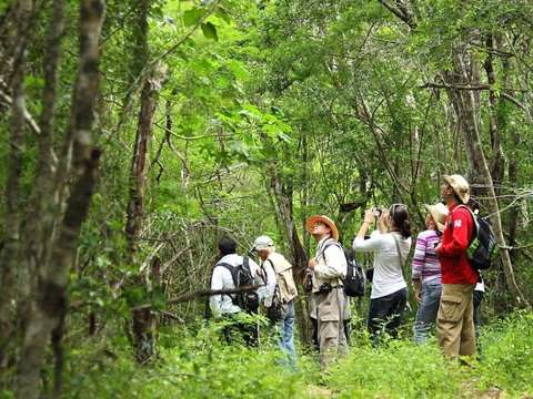 Full Day: Diversidad en el Bosque del Altomayo