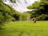 Foto de Full Day: San Pedro de Lloc y el Bosque de Algarrobos