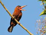 Foto de 2d/1n Selva Central Maravillosa