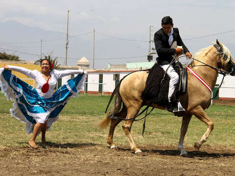 Official Show Paso Horse + Transfers