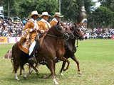 Foto de Show Oficial del Caballo Peruano de Paso