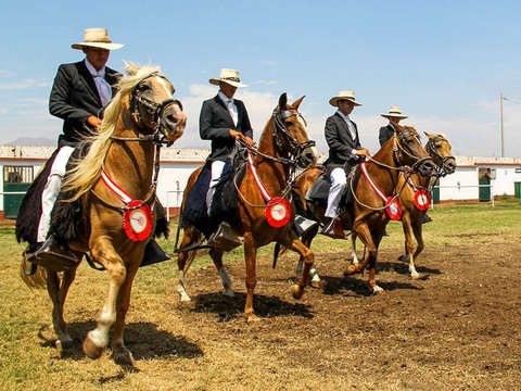 Official Show of the Peruvian Paso Horse