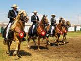 Foto de Show Oficial del Caballo Peruano de Paso y Marinera Trujillo