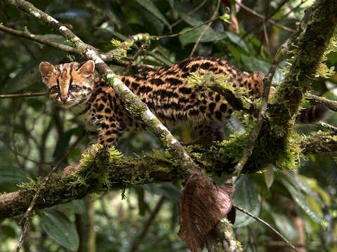 Trekking: Conociendo el Parque Nacional Yanachaga Chemillén
