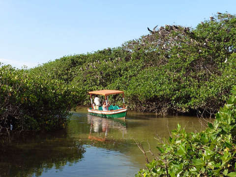 Combined Tour: the Mangroves and Frontier - Peru Ecuador