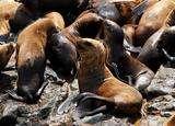 Foto de Full Day Ica: Islas Ballestas o Huacachina Extrema (Sab/Dom)