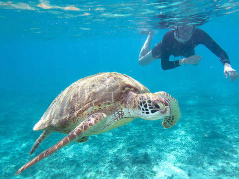 Mancora and Sea Turtles: Total Adventure - 3d / 2n