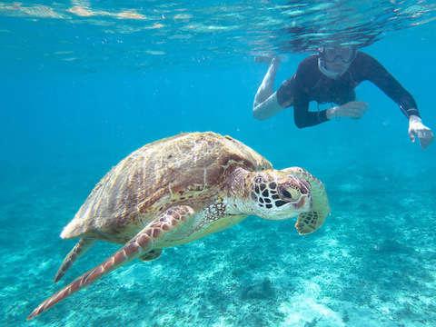 Máncora y Tortugas Marinas: Aventura Total - 3d/2n