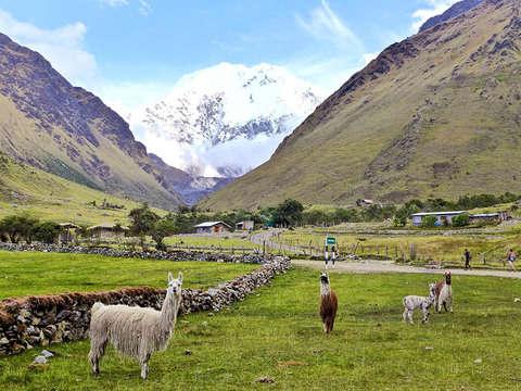 Trek Salcantay a Machu Picchu