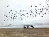 Foto de Cabalgata de 2 Horas por Valle y Playa