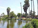 Foto de Tour Aucallama - Apicultura (Desde Lima)