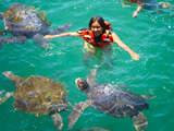 Foto de 2d/1n Máncora en Ecolodge y Tour Nadando Con Tortugas