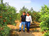 Foto de Tour Vivencial - Cosecha de Frutas (Desde Huaral)