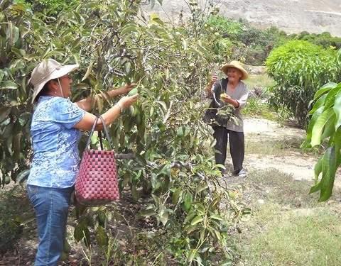 Tour Vivencial - Cosecha de Frutas