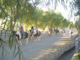 Foto de Paseo a Caballo en la Campiña Arequipeña