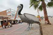 Foto de Full Day Paracas - Ica (Desde Lima)