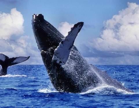 3d/2n Nadando Con las Tortugas y Avistamiento de Ballenas