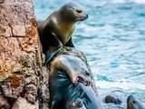 Islas Ballestas en Full Day Bravazo - Paracas, Ica, Chincha