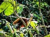 Hoatzin o shansho en Iquitos 4 Días / 3 Noches Asombrosa Amazonía