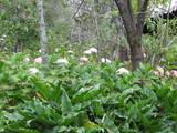Jardín de las Hortensias