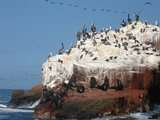 Foto de Paracas, Ica - 2d1n - Fines de Semana (Desde Lima)