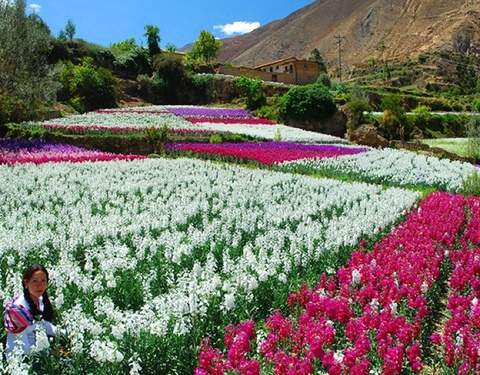 "Tour Tarma ""The Pearl of the Andes"" (Full Day)"