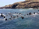 Foto de Paseo Islas Guañape