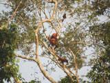 Foto de Pacaya Samiria - la Selva de los Espejos - 3d/2n