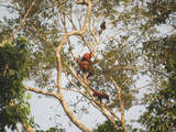 Foto de Pacaya Samiria - la Selva de los Espejos