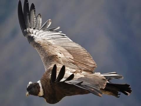 Cañon del Condor - Cusco