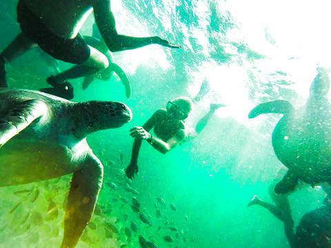 Full Day: Nado Con Tortugas en el Ñuro + Punta Veleros