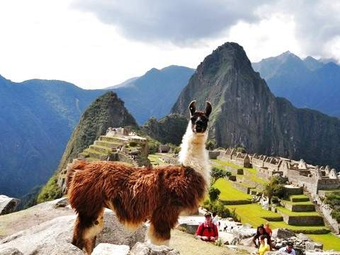 Machu Picchu Full Day (From Poroy)