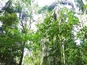 Foto de Río Amazonas - 4d/3n